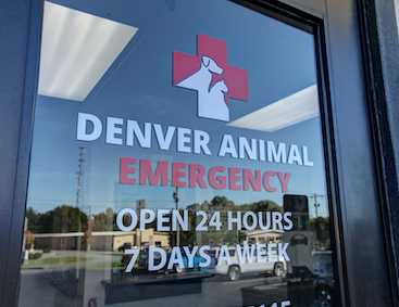 Denver Animal Emergency Veterinarian Open 24 hours